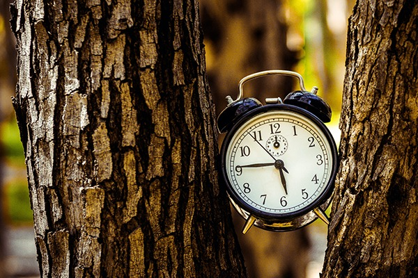 Clock in a tree showing that time flew by.